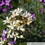 Chroniques de mon jardin: Beautés d'avril (1)