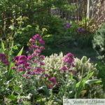 Chroniques de mon jardin : un matin au soleil...