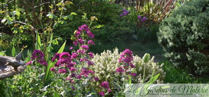 Chroniques de mon jardin : un matin au soleil…