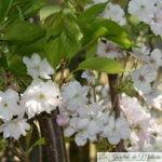7 arbustes que j'aime, pour fleurir mon printemps