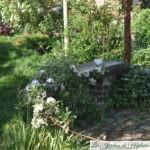 Chroniques de mon jardin: Beautés d'avril (2)
