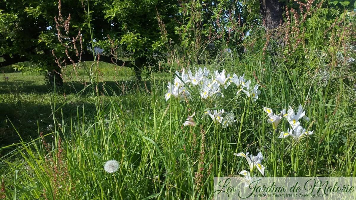 jardin naturel et tonte différenciée (crédit photo Christophe Pugliese)