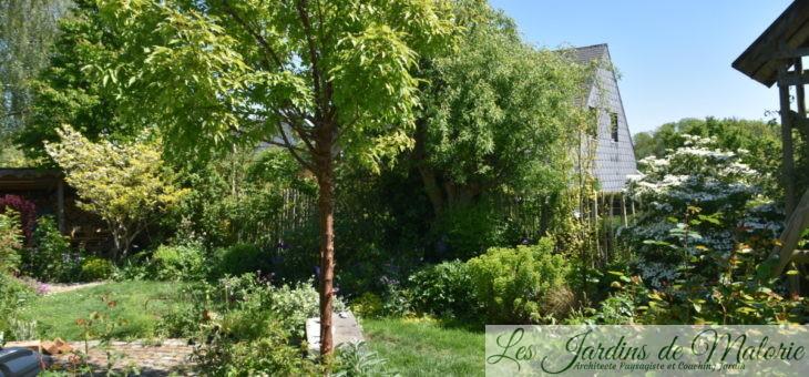 Chroniques de mon jardin: mes arbres