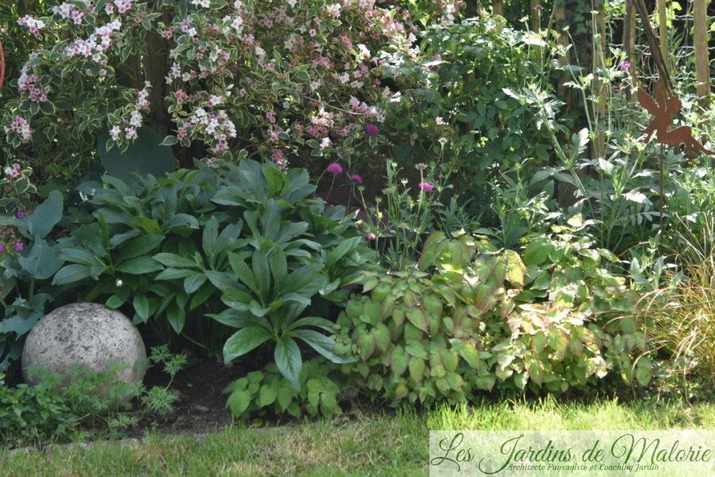au pied du weigelia florida variegata, géranium, hellébore, épimedium, carex forment une bordure de feuillages