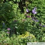 Chroniques de mon jardin : contemplation à l'heure du thé