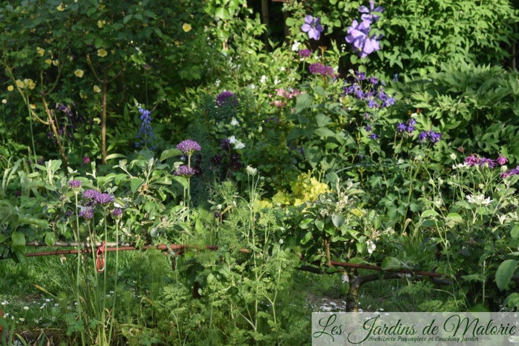 le pommier cordon au bord de la terrasse ronde