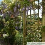 Chroniques de mon jardin: soleil de mai!