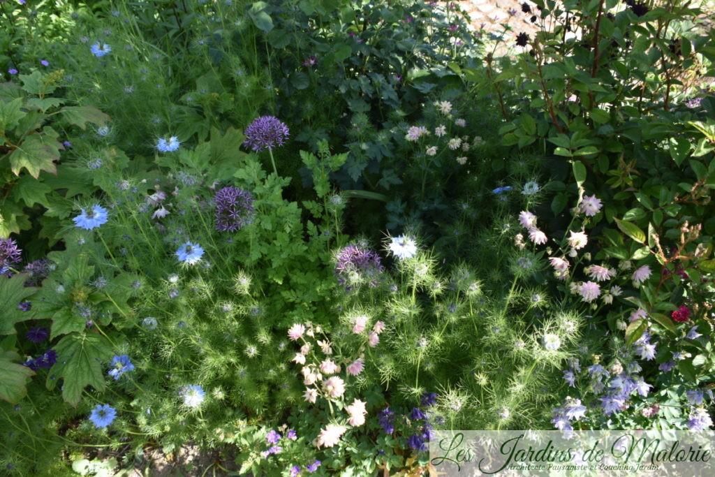 hydrangea quercifolia 'Burgundy', nigelles, ancolies, alliums...