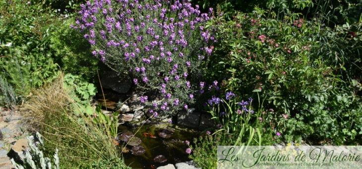 Chroniques de mon jardin : autour du bassin
