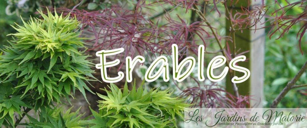 Erables
