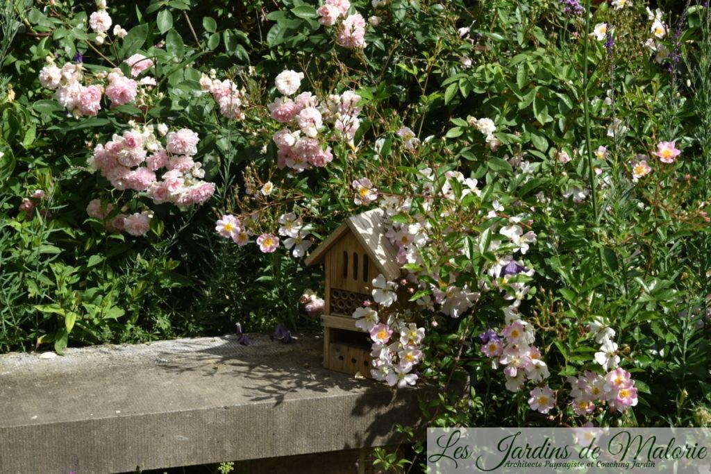 rosiers 'Belle de Sardaigne' et 'Tapis Volant'