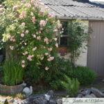 Visite d'un jardin privé : Le jardin des voisines