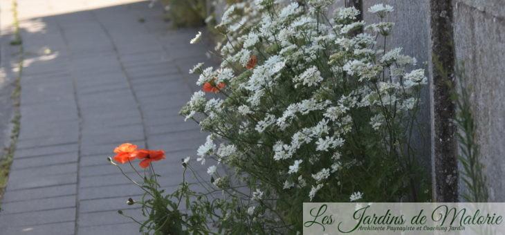 Annulation de la journée Portes ouvertes au jardin ce 7 juin!