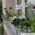 "Mes jardinières 2020: ""White&Black"""