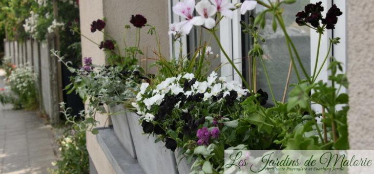 Mes jardinières 2020: «White&Black»