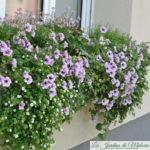 Jardinières fleuries en 8 leçons