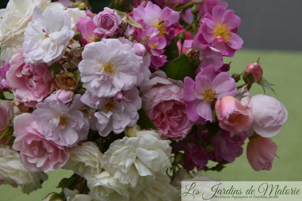 bouquet de roses du jardin