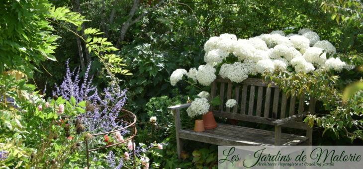 Chroniques de mon jardin: Début juillet