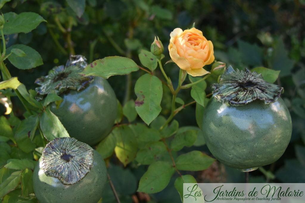 Capsules de pavots en terre émaillée et rosier 'Graham Thomas'