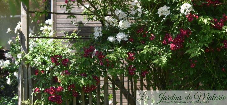 Chroniques de mon jardin : rétro de juin