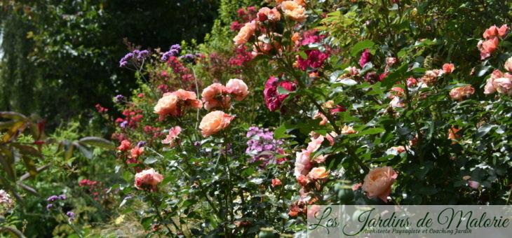 Visite du jardin de Marie (jardin privé)