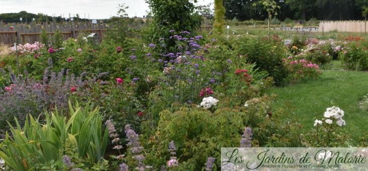 Le Jardin des Roses Anciennes André Eve