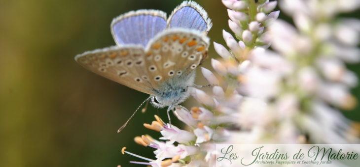 🦋 Avec Natagora : Devine qui papillonne au jardin!