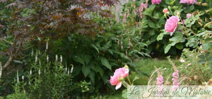 Chroniques de mon jardin: au revoir Juillet!