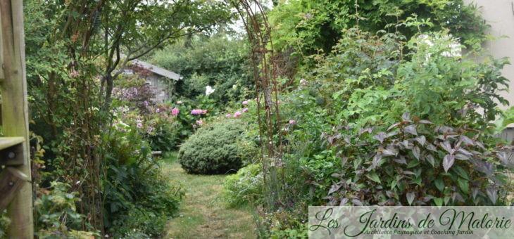 Sécheresse et canicule… Les plantes qui résistent