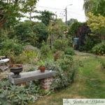 Chroniques de mon jardin : Bonjour Août!