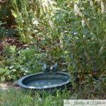 De l'eau pour les oiseaux et les hérissons