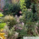 Chroniques de mon jardin : beautés du moment