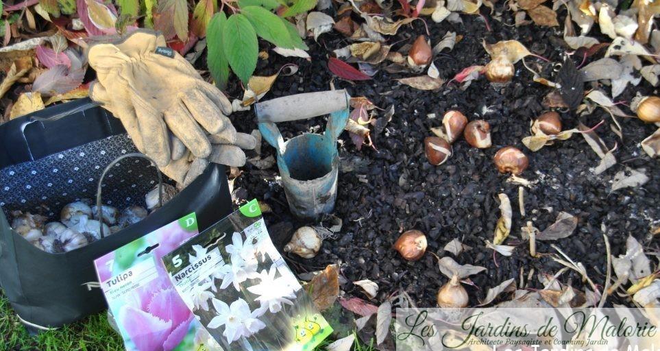 plantation des bulbes printaniers