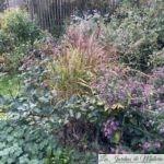 Chroniques de mon jardin : fin octobre
