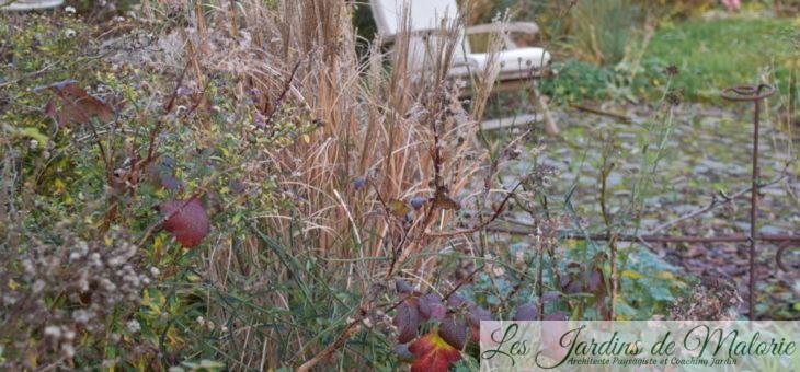 Travaux du mois: En janvier, le jardin se repose, pas vous?