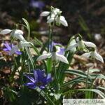 Chroniques de mon jardin : Beautés de février...