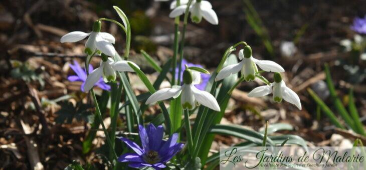 Chroniques de mon jardin : Beautés de février…
