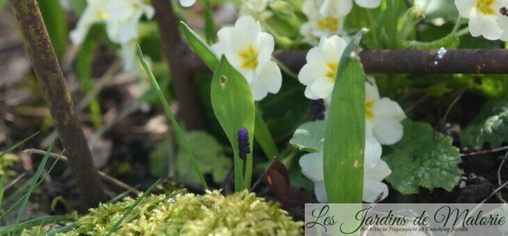 Chroniques de mon jardin : Les symptômes du printemps