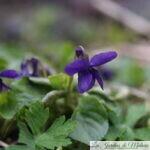 Chroniques de mon jardin: Fleurs du moment