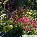 Chroniques de mon jardin : Avril frisquet