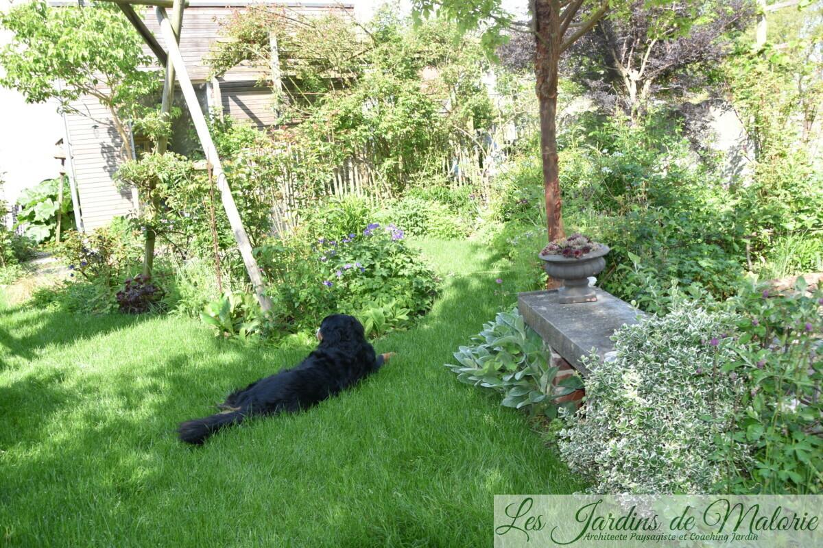 Nala dans le nouvelle pelouse