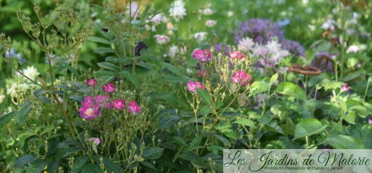 Chroniques de mon jardin : Beautés du moment (1)