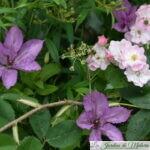 Chroniques de mon jardin: fin juin...