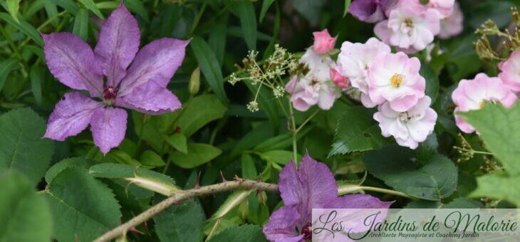 Chroniques de mon jardin: fin juin…
