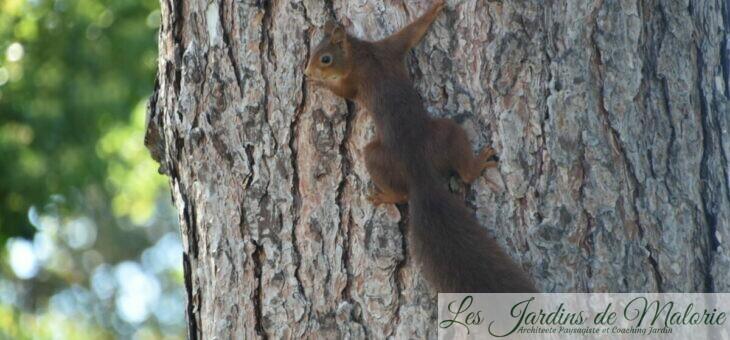 Mon voisin l'écureuil roux
