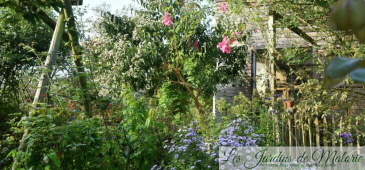 Retour en mon jardin : Septembre…